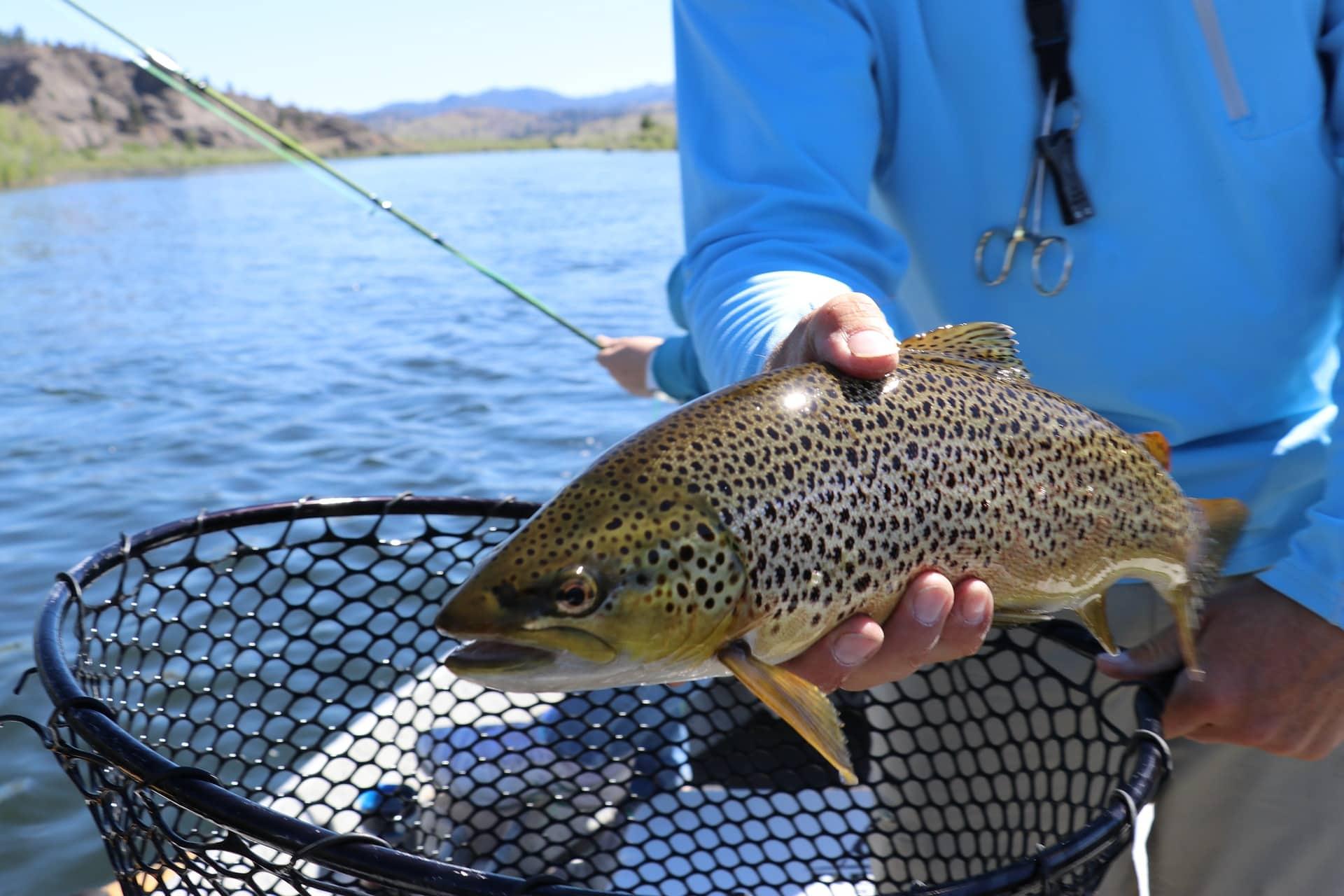 15 of the Best Fishing Spots in New Zealand